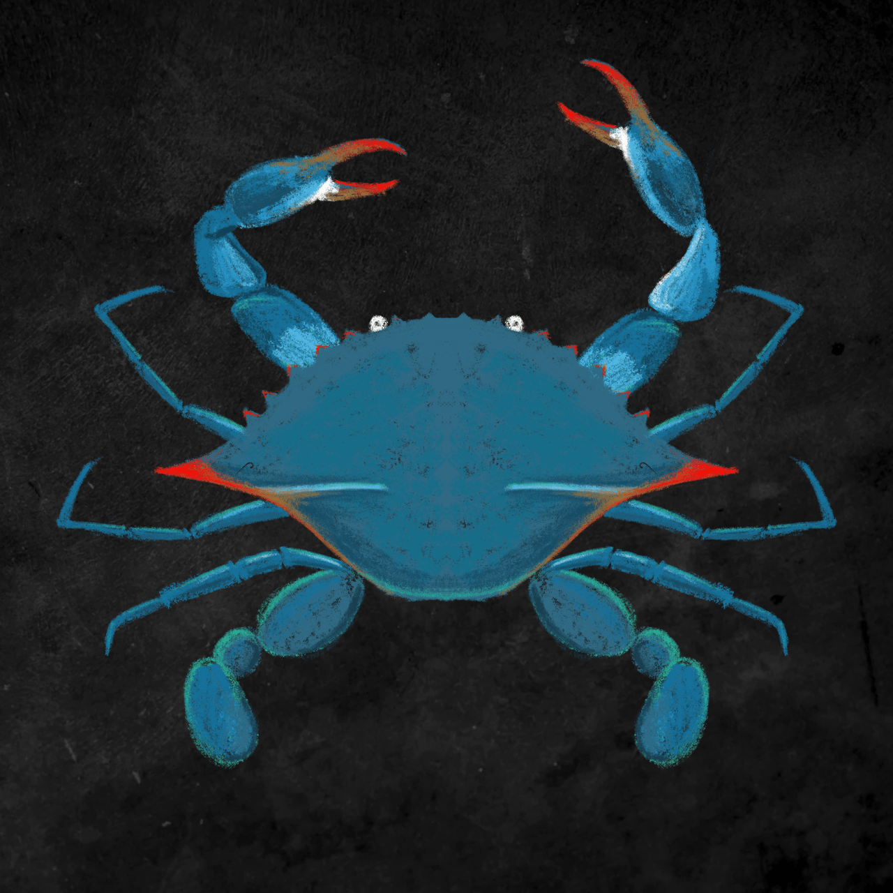 Blue crab illustrated by Ceindy Doodles